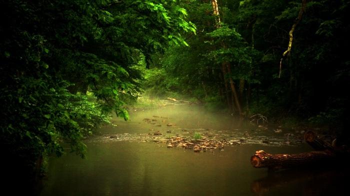 trees, nature, mist, river, sunlight, foliage, green, landscape