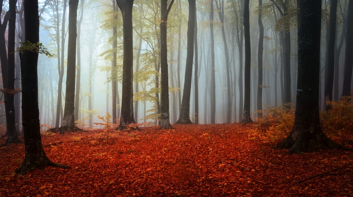 forest, fall, trees, branch, mist, leaves, silhouette, nature, wood