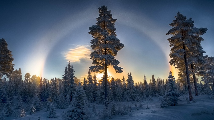 blue, winter, sunset, Halo, snow, forest, trees, landscape, nature, sky, cold