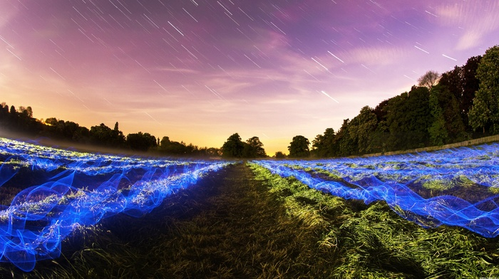night, long exposure, landscape, grass, light trails, clouds, stars, forest, field, plants, trees, blue, nature, sky
