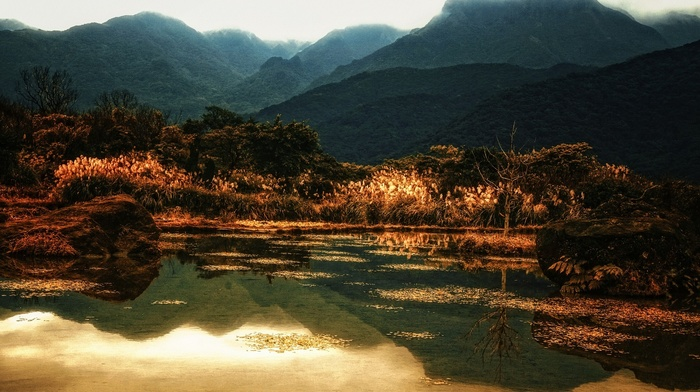 nature, trees, lake, reflection, shrubs, gold, water, mountain, landscape, fall
