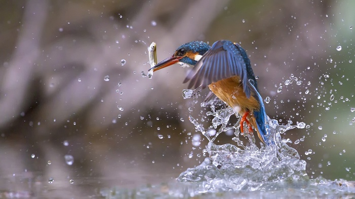 water, animals, fish, nature, birds, water drops