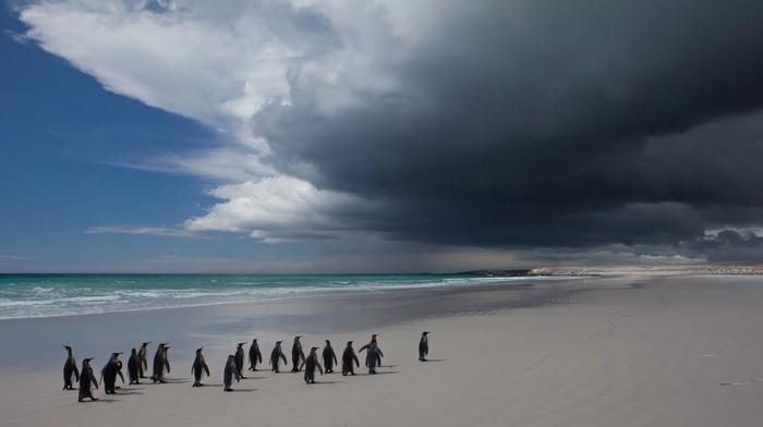 beach, sand, sea, horizon, Antarctica, penguins, landscape, clouds, coast, nature, animals