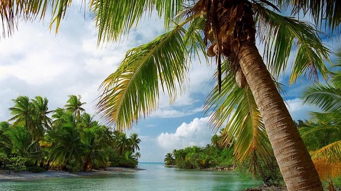 nature, summer, palm trees, clouds, island, sea, tropical, landscape, beach
