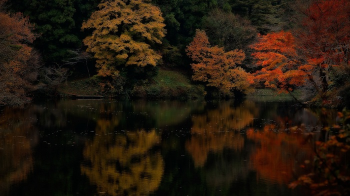 trees, water, reflection, landscape, colorful, forest, fall, maple leaves, nature, lake