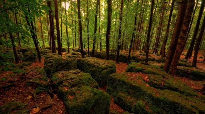 leaves, moss, branch, trees, forest, nature, dead trees, rock