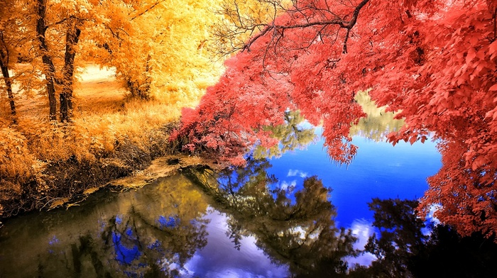 colorful, yellow, fall, lake, trees, landscape, nature, grass, water, pink, reflection, calm, blue