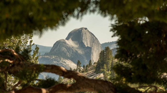 mountain, landscape, trees, depth of field, Half Dome, USA, nature, Yosemite National Park
