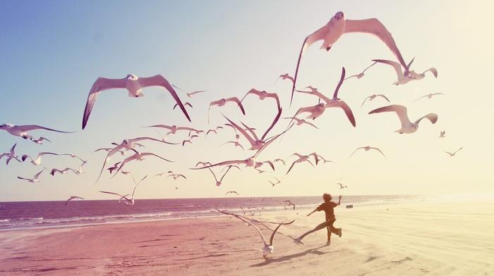 beach, photography, seagulls, children
