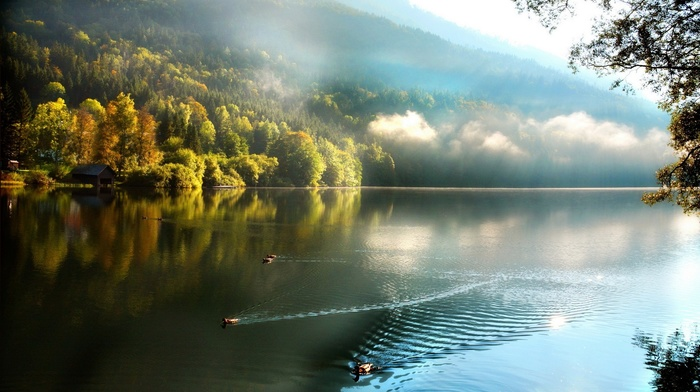 fall, nature, reflection, clouds, mist, trees, boathouses, forest, duck, landscape, water, swimming, lake