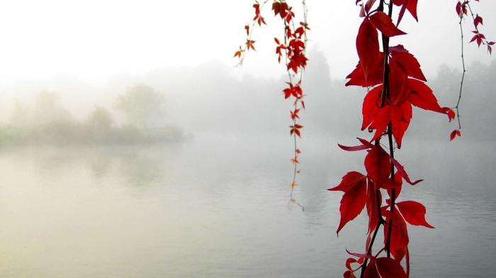 leaves, mist, lake, red leaves