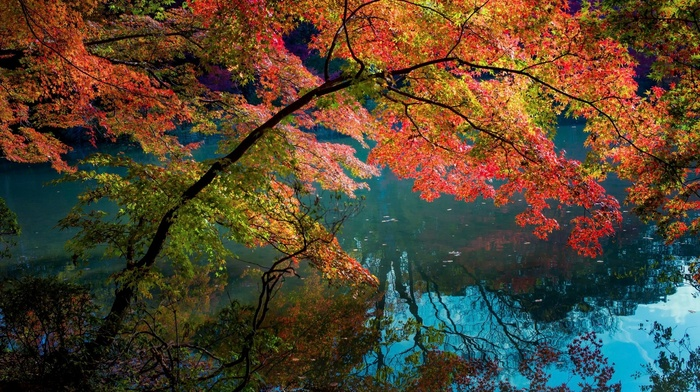 water, fall, lake, trees, reflection, shrubs, turquoise, nature, daylight, colorful, landscape
