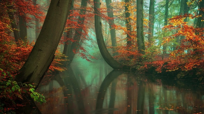 nature, green, red, river, reflection, fall, water, peace, mist, trees, leaves, yellow, forest, landscape