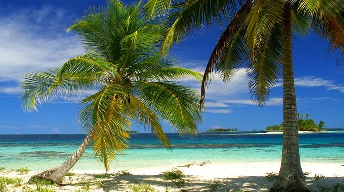 island, beach, tropical, Panama, palm trees, nature, sea, landscape, summer