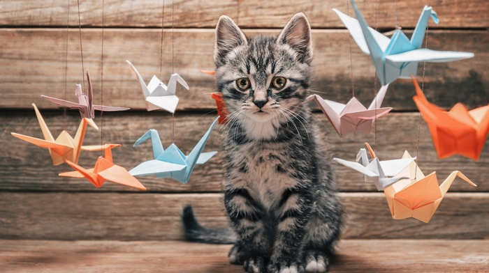 baby animals, kittens, origami, cat, depth of field, thread, birds, animals, wooden surface, nature, pet