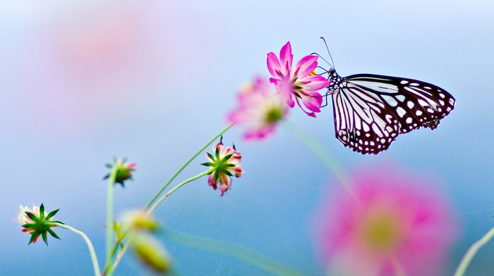 flowers, lepidoptera, insect, macro