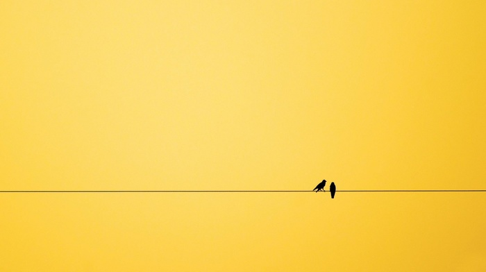 minimalism, birds