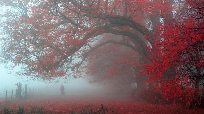 atmosphere, fence, trees, mist, leaves, red, landscape, morning, UK, walking, nature