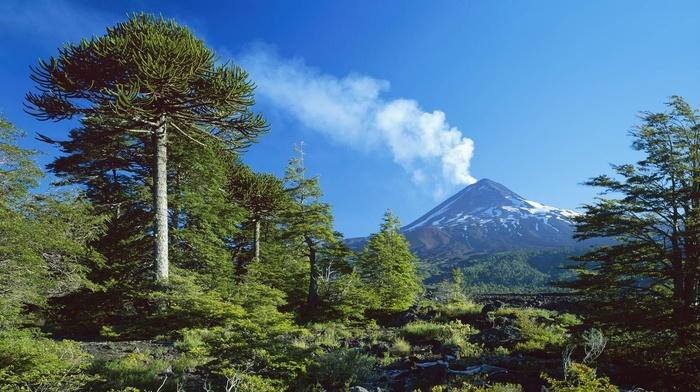 volcano, snowy peak, landscape, Chile, smoke, trees, forest, sky, blue, nature, daylight