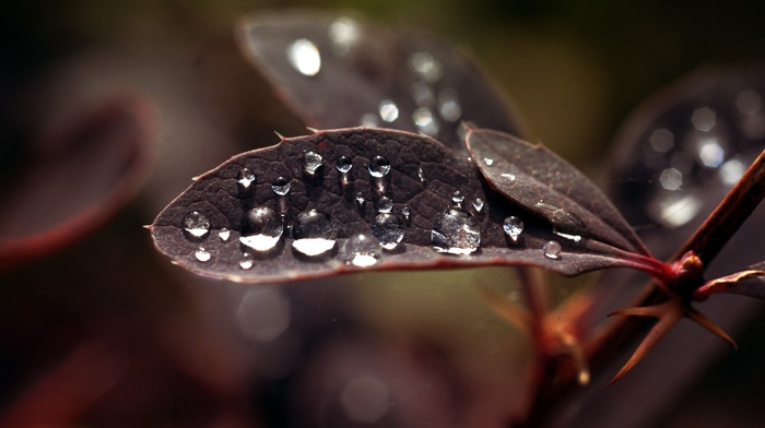 macro, water drops, plants