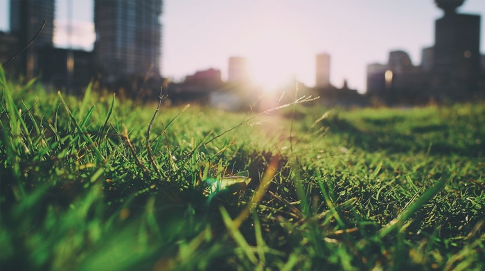 summer, nature, grass, blurred, depth of field, closeup