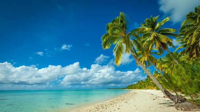 summer, tropical, palm trees, white, clouds, sand, sea, island, beach, landscape, nature