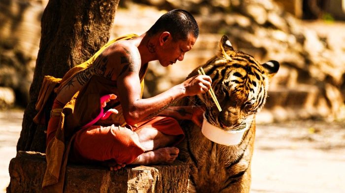 depth of field, tattoo, eating, sitting, China, tiger