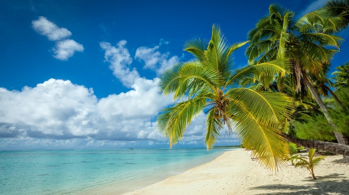 white, sea, landscape, tropical, nature, beach, palm trees, summer, sand, island, clouds