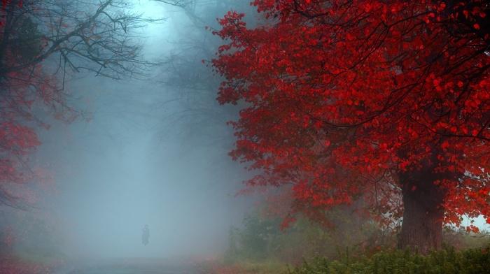 UK, red, mist, landscape, fall, shrubs, morning, road, nature, green, blue