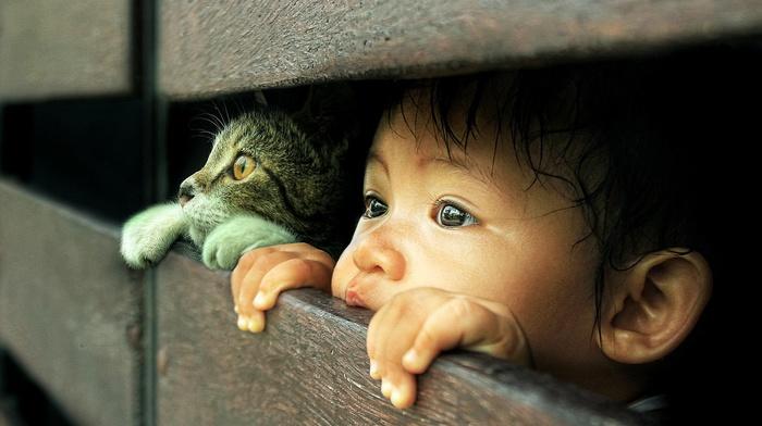 children, cat