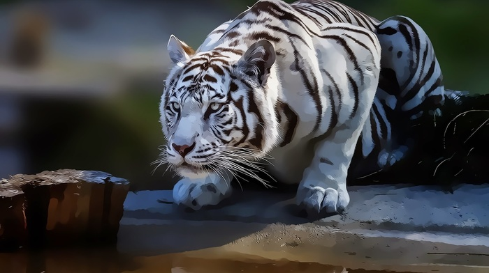 white tigers, animals, tiger, artwork, drawing