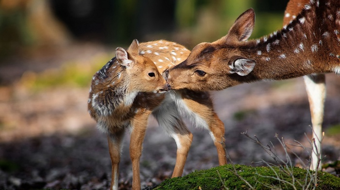 nature, animals, deer, baby animals