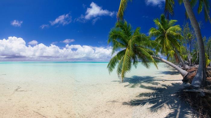 summer, tropical, palm trees, sea, landscape, nature, island, sand, clouds, beach, white