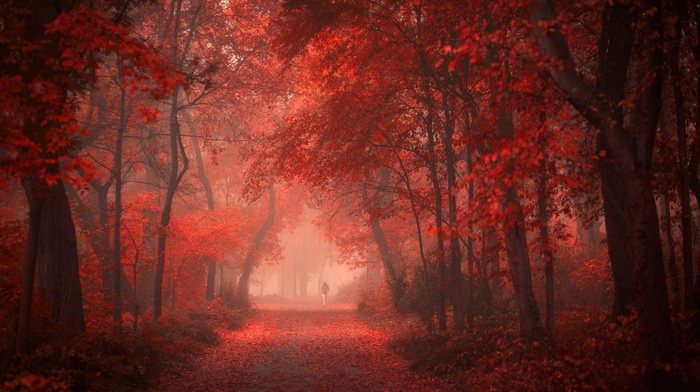 shrubs, trees, red, mist, road, fall, walking, leaves, landscape, park, nature, morning