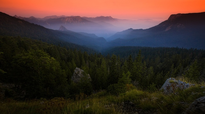 amber, mountain, forest, nature, landscape, sunrise, shrubs, mist, grass, Bosnia, sky