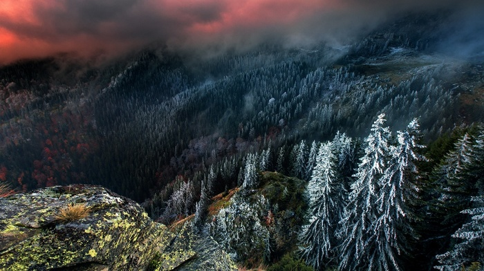 snow, sky, landscape, nature, clouds, mountain, forest, pine trees, winter