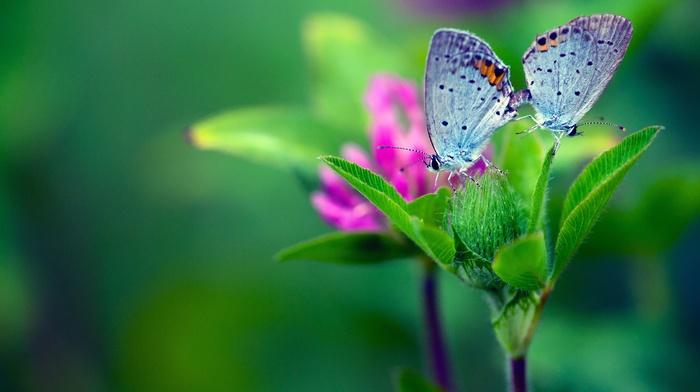 plants, macro, flowers, lepidoptera
