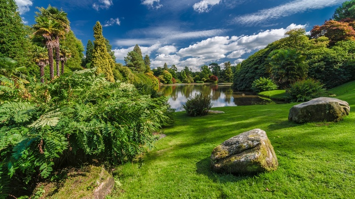stones, nature, palm trees, clouds, UK, lake, forest, trees, park, grass, water, plants
