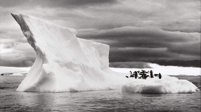 penguins, landscape, monochrome, clouds, Sebastiao Salgado, nature, sea, animals, ice, photography, Antarctica, iceberg