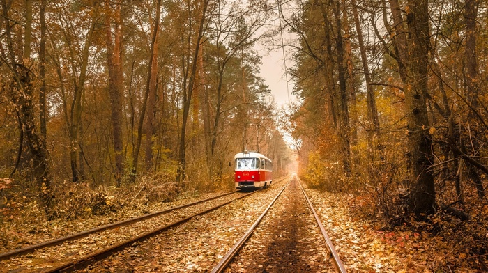 tram, vehicle, wire, branch, rail yard, nature, electricity, Ukraine, leaves, forest, railway, fall, trees