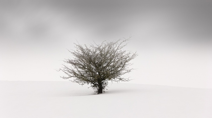 landscape, trees, minimalism, nature, winter, mist, blurred, branch, simple, snow