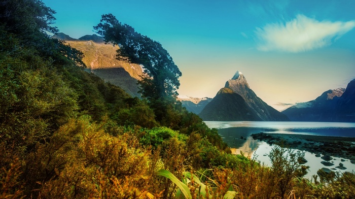 mountain, New Zealand, landscape, morning, Milford Sound, fjord, shrubs, snowy peak, trees, nature, sunrise