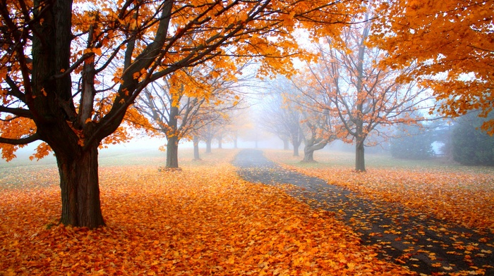 fall, daylight, morning, trees, road, leaves, nature, path, orange, landscape, mist