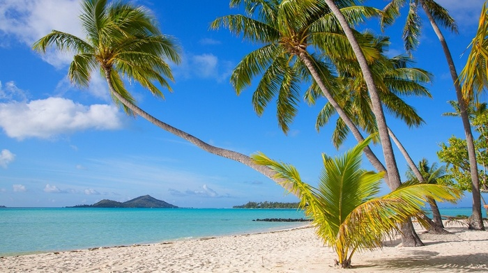 beach, Bora Bora, landscape, sea, French Polynesia, island, nature, palm trees, tropical, sand, white, summer
