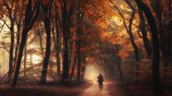 dirt road, atmosphere, orange, sunlight, shrubs, fall, nature, landscape, photographers, leaves, forest, trees, mist