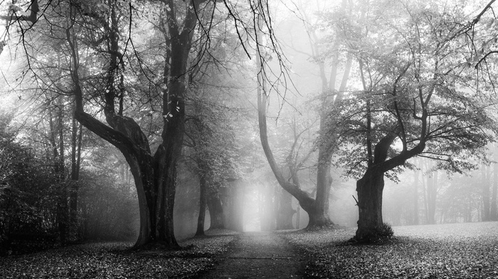 morning, sunrise, leaves, monochrome, Germany, nature, path, landscape, fall, mist, dirt road, old, trees