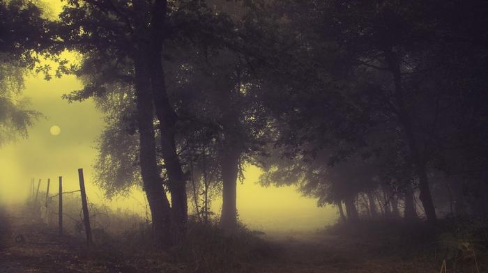 fence, nature, landscape, trees, sunrise, mist, silent, path, shrubs, morning