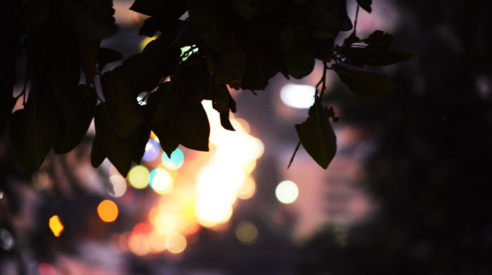 top view, bokeh, city, leaves