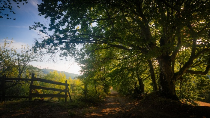 sunlight, dirt road, trees, shadow, fence, nature, path, landscape, foliage, mountain