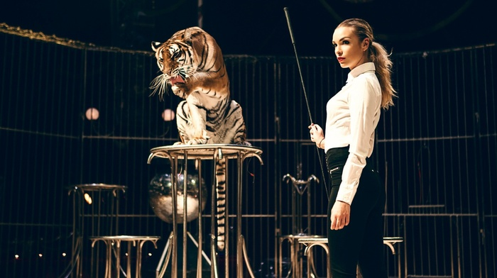 looking away, model, tight clothing, circus, blonde, wild cat, danger, girl, whips, cages, training, animals, red lipstick, tiger, shirt, ponytail, long hair